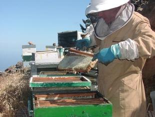 APAEX cifra en un 60% el descenso de producci�n de miel en Extremadura por las ''an�malas'' condiciones climatol�gicas