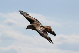 Extremadura pretende atraer a turistas con la promoci�n en Tarragona de su variedad de aves