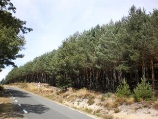 Las ayudas a la innovación en los sectores agrario y forestal extremeños permitirán la creación de 32 grupos operativos