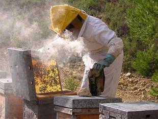 Los apicultores dispondrán de 2 millones en ayudas para mejorar la producción y comercialización de sus productos