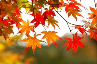 El último fin de semana del verano trae un adelanto del otoño