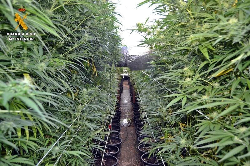 Cinco detenidos de un grupo organizado dedicado presuntamente al cultivo y tráfico de drogas en Extremadura