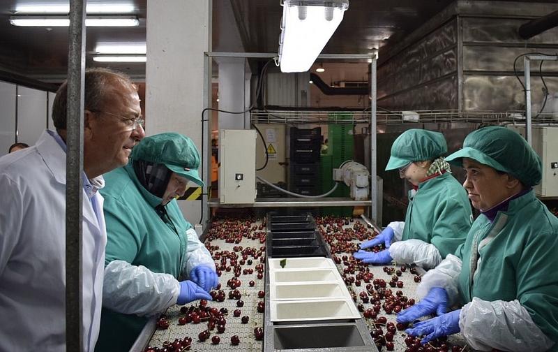 Monago reclama una estrategia de internacionalización del sector de la cereza como producto diferenciado