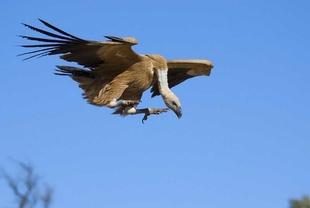 Extremadura presenta su oferta de turismo ornitológico en Reino Unido