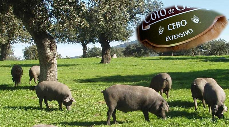 APAG Extremadura Asaja pide que se diferencie 'claramente' los productos ibéricos en extensivo de los que no lo son