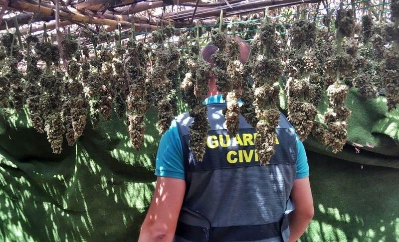 La Guardia Civil desmantela en Alburquerque una plantación y un secadero de marihuana con 225 plantas y 5 kilos de cogollos