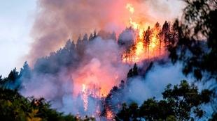 Los grandes incendios forestales son una evidencia más de la emergencia climática