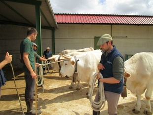 Agricultura organiza una charla informativa sobre ganadería ecológica en la Feria de Zafra
