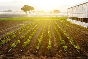 Agricultura abona a 33.166 perceptores el pago básico de la PAC, con casi 162 millones de euros