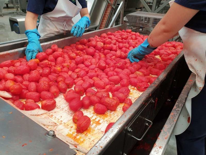 Agricultura abona las nóminas de la PAC del tomate y a pequeños agricultores