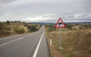 La Junta instala señales de tráfico en la EX-118 para combatir el atropello de linces ibéricos