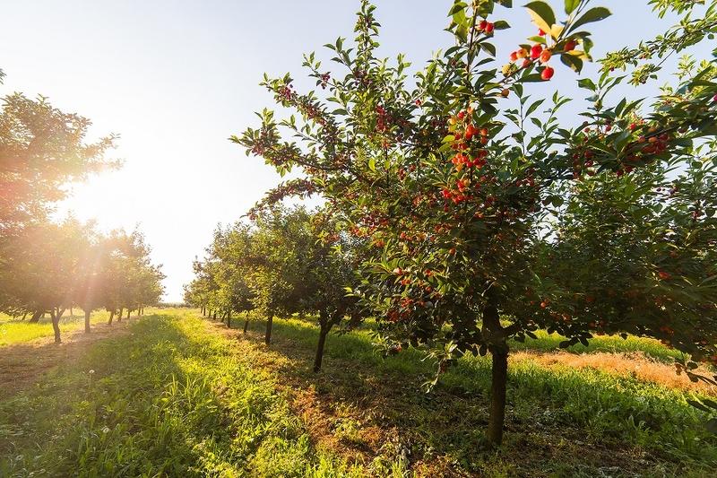 Agricultura crea una plataforma de formación online permanente para desarrollar pymes innovadoras en el mundo rural