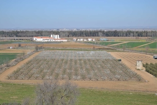Cicytex organiza una jornada de campo para mostrar ensayos de cultivos hortícolas