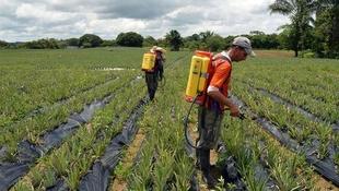 ¿Cómo afecta el estado de alarma al sector agrícola, ganadero y pesquero?