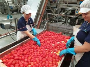 Agricultura autoriza el abono a 3.870 perceptores de 2 millones de euros de ayudas asociadas al arroz y el tomate