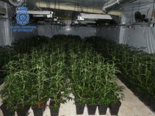 La Policía Nacional desmantela una plantación de marihuana con 1.500 plantas