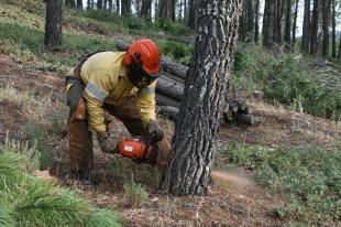 Publicada en el DOE la orden que establece la época de peligro alto de incendio desde el 1 de junio