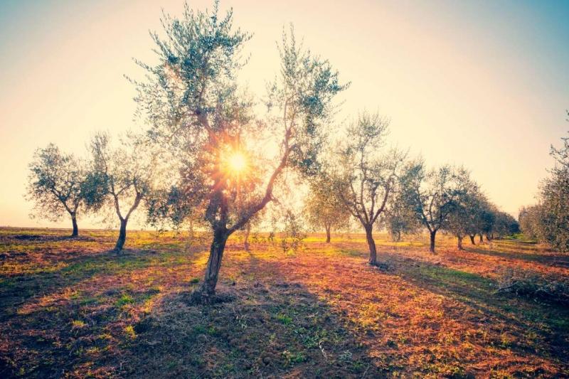 La Junta de Extremadura abona más de 25 millones de euros de los saldos básicos y verdes