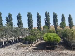 Política Forestal activa una campaña extraordinaria de donación de plantas para programas de formación, educación y empleo