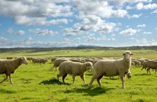 Publicada la orden de ayudas a la mejora en bioseguridad en explotaciones bovinas y caprinas