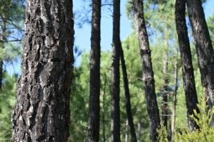 Convocatoria de ayudas para inversiones en tecnología forestal por valor de 2 millones de euros