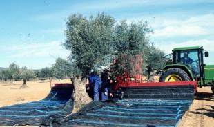 La Junta de Extremadura abona las ayudas al almacenamiento privado del aceite de oliva
