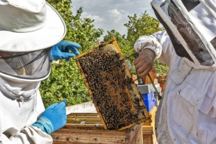 Publicadas las resoluciones de ayudas para mejorar la producción y comercialización de productos de apicultura