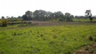La Junta de Extremadura abona más de 3,5 millones de euros de las ayudas a la forestación de tierras agrarias