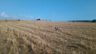 Política Forestal publica el procedimiento para autorizar el pastoreo en el monte de Trasierra, en prevención de incendios