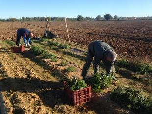 La Junta de Extremadura publica la resolución de las solicitudes de calificación de agricultor a título principal