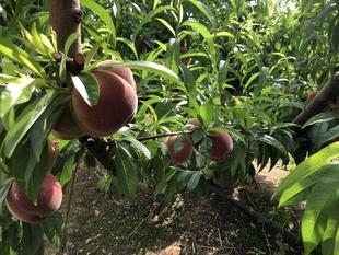 La Junta de Extremadura regula la venta directa de determinados productos agrarios en la región desde las explotaciones agroganaderas