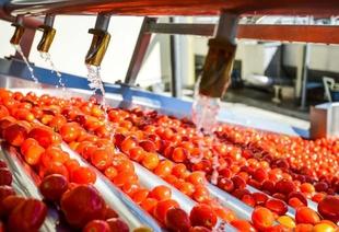 Publicada la orden que fomenta agrupaciones y organizaciones de productores agrarios en Extremadura y regula las subvenciones