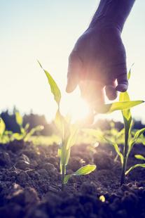La Junta publica en el DOE la orden que aprueba un nuevo instrumento financiero para profesionales agrarios ya instalados