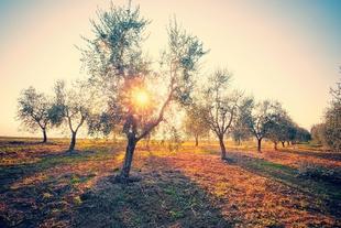 Agricultura abona 13,7 millones de euros correspondientes a las ayudas agroambientales solicitadas en 2020