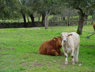 La Junta de Extremadura somete a información pública el proyecto del decreto que regula la autorización y registro de las explotaciones ganaderas