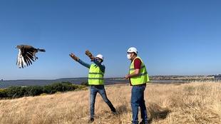 Liberados tres águilas culebreras y un milano real en el entorno de Logrosán que han sido marcados para su seguimiento