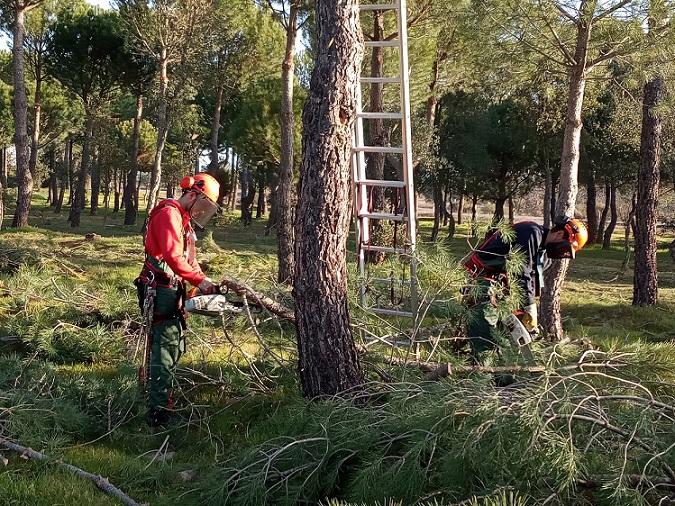 El Centro de Formación del Medio Rural de Navalmoral de la Mata imparte el próximo curso tres ciclos de FP especializados en sectores forestal y ecues