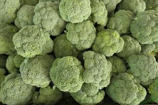 CICYTEX edita un manual del cultivo del brócoli en Extremadura