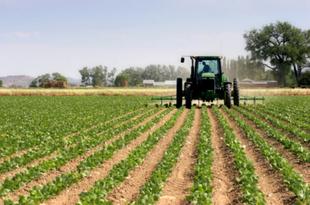 Unos 7.000 agricultores y ganaderos reciben cuatro millones de euros de ayudas para contratar seguros