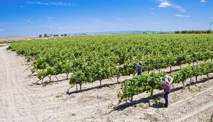 M�s de 200 viticultores extreme�os reciben 5,5 millones en ayudas a la reestructuraci�n y reconversi�n de vi�edo